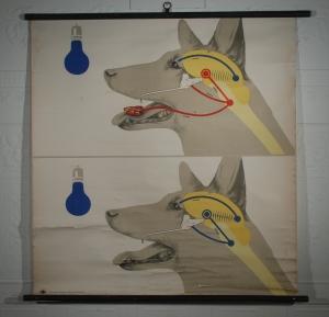 German dog chart_edited-1