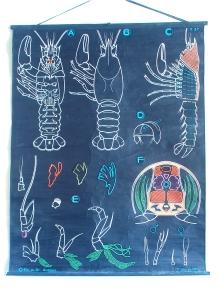 Drauzoux.crayfish